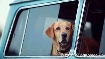 """In viaggio da Palermo per un """"bau tour"""": i grandi cammini italiani da fare con il cane - PalermoToday"""