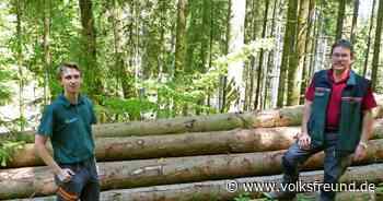 Privatwaldbesitzer haben einen neuen Berater im Forstamt Bitburg - Trierischer Volksfreund