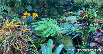 Muttart Conservatory reopens Friday after $13M rehabilitation project