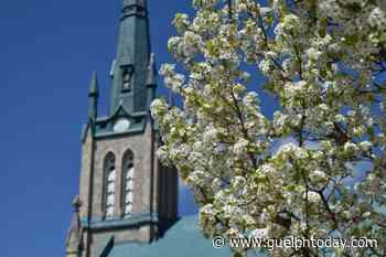 Spring has sprung in Elora and Fergus (14 photos) - GuelphToday