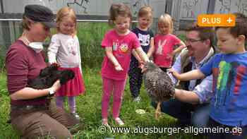 Bergheim: Kindergarten bekommt sechs Hühner - Augsburger Allgemeine