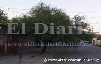 Huizache en San Felipe invade hasta media calle por falta de poda - El Diario de Chihuahua