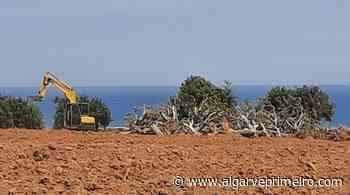 Movimento denuncia continuação de trabalhos embargados no Parque Natural da Ria Formosa - Algarve Primeiro