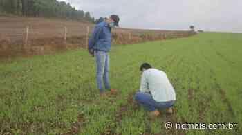 Pai e filho cultivam cereais de inverno em Faxinal dos Guedes, no Extremo Oeste de SC - ND Mais