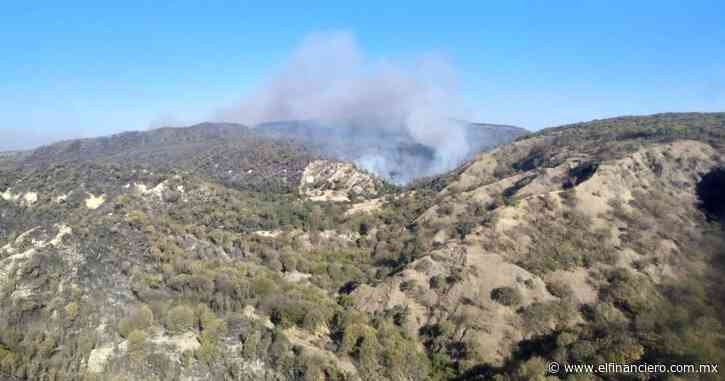 Gobierno federal frena la subasta de terrenos en el Bosque La Primavera - El Financiero