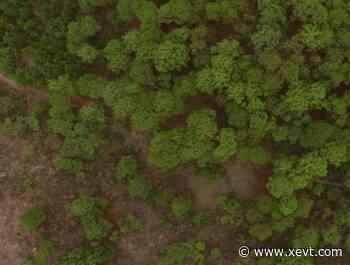 Indep retira lote ubicado en el Bosque La Primavera, en Jalisco - XeVT 104.1 FM   Telereportaje