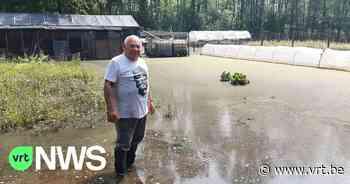 """Tuin van François en Rosa uit Diest staat al een maand onder water door overstroomde beek: """"Alles is kapot"""" - VRT NWS"""