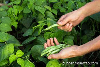 Pagamento do Garantia Safra foi regularizado para 91 agricultores pendentes em Guanambi - Agência Sertão