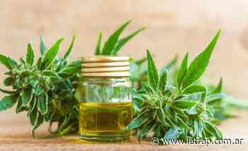 Superadas las trabas de Bullrich, Santa Fe prende la industria del cannabis - Letra P