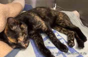 POL-AUR: Wittmund - Verletzte Katze am Fahrbahnrand aufgefunden - Presseportal.de