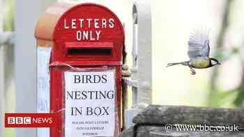 The chick's in the post: Bird builds nest in Highlands mail box