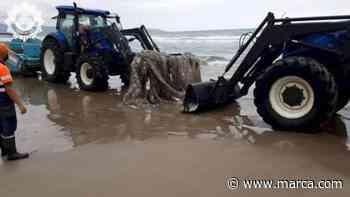 Un calamar gigante aparece muerto en una playa de Castellón - MARCA.com