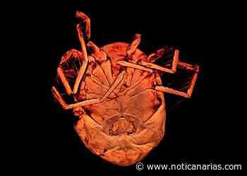 Descubierta nueva especie de ácaro en las charcas de Alpedrete, pueblo de Madrid - Noticanarias