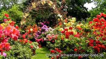 Freudenstadt - Der Umhofer-Garten in der Nordstadt öffnet an diesem Freitag seine Pforten - Schwarzwälder Bote