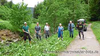 Naturschutz - Bad Rippoldsau-Schapbach: Mit Sichel und Sense gegen Japanknöterich - Schwarzwälder Bote