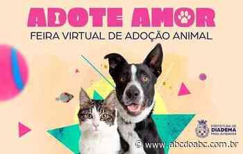 Feira virtual de adoção animal de Diadema já fez 36 bichinhos felizes - ABCdoABC