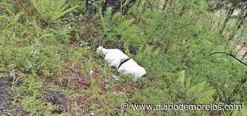 Descubren cadáver en costales en carretera Huitzilac-Lagunas de Zempoala - Diario de Morelos