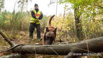 Suche erfolglos: Vermisster (61) versteckt sich im Wald - Merkur.de