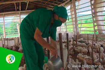 Convenios avícolas en Pinar del Río, avanza La Palma - Tele Pinar