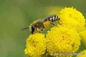 Wandelen of fietsen tussen de bijen
