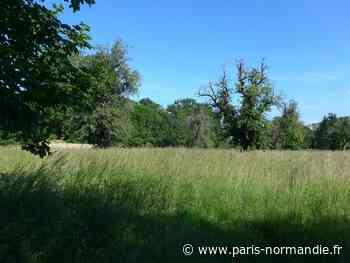 À Bonsecours, la polémique autour des Jardins de la basilique continue - Paris-Normandie