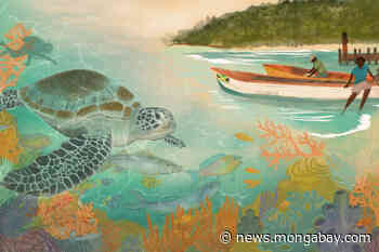 Conservation solutions in paradise: Jamaica's Oracabessa Bay Fishing Sanctuary - Mongabay.com