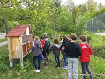 Grünes Klassenzimmer - Insektenhotel in Mallersdorf-Pfaffenberg - idowa