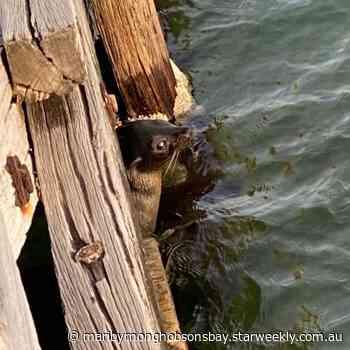 Seal of approval for Altona | Maribyrnong & Hobsons Bay - Star Weekly - Star Weekly
