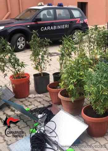 Nuova varietà di canapa indiana scoperta a Pantelleria dai Carabinieri. Un arresto - Pantelleria Notizie - Punto a Capo Online
