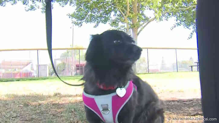 Rocklin Considers Mandating Pet Owners Pick Up Waste