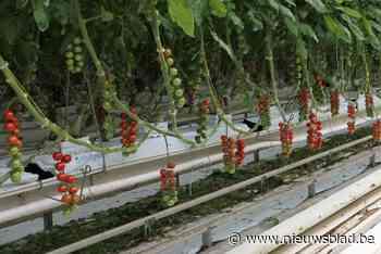 Dorpsraad in beroep tegen uitbreiding tomatenserre