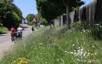 Auf 30 Flächen der Stadt Winnenden gibt's Nahrung für Wildbienen - warum sie nun gemäht werden - Winnenden - Zeitungsverlag Waiblingen