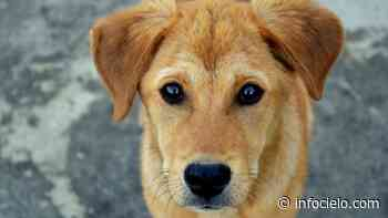 Nueva jornada para vacunar perros y gatos gratis en La Plata - Infocielo