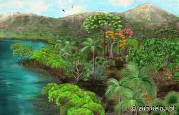 Floresta fóssil no Peru guarda segredos sobre a história da América do Sul - ZAP