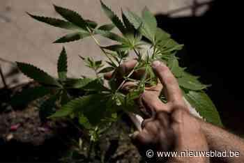 Projectontwikkelaar plant 500.000 cannabisplanten op bouwgrond (en dat is volkomen legaal)
