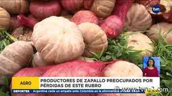 Se pierde producción de zapallo en Chiriquí - TVN Panamá
