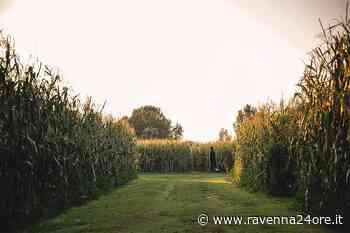 """Il Labirinto di Alfonsine dedicato al """"Purgatorio"""" di Dante – Ravenna24ore.it - Ravenna24ore"""