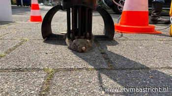 Rattenvallen gezet in Nazareth - RTV Maastricht