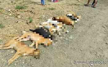 Envenenan a perros y gatos en La Ciudadela Metropolitana - El Diario Ecuador