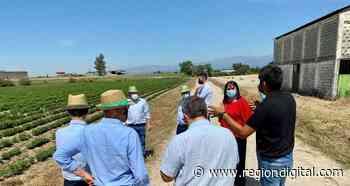 García Bernal visita las instalaciones de Biostevera en Villanueva de la Vera - Región Digital