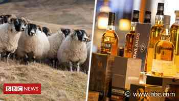 Scottish food and drink sector criticise Australia trade deal - BBC News