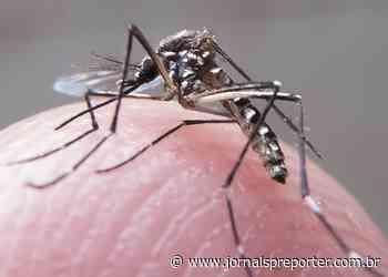 Itapecerica da Serra: Ação de combate à dengue atende Santa Júlia e Bairro do Crispim neste sábado, 12 - Jornal SP Repórter News