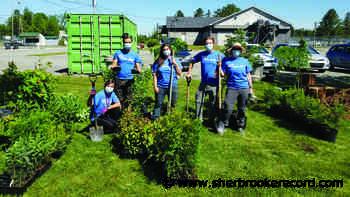 Cookshire-Eaton participates in tree planting program - Sherbrooke Record