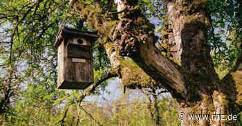Eppingen: Wie Obstbaumplantagen neues Bauland bringen sollen - Rhein-Neckar Zeitung