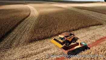 Colheita do milho começou em Nova Mutum/MT e produtividades vão de 68 à 150 sacas por hectare - Notícias Agrícolas