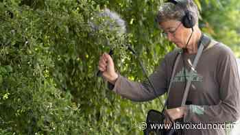 À Raismes, venez écouter les murmures de la forêt avec Anne Versailles samedi - La Voix du Nord