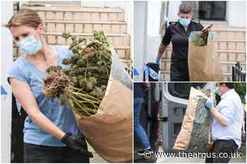 Cannabis factory found at Albany Villas, Hove as police swoop