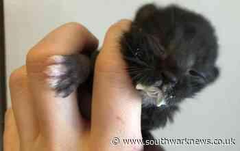 Day-old kitten rescued from Dulwich garden - Southwark News