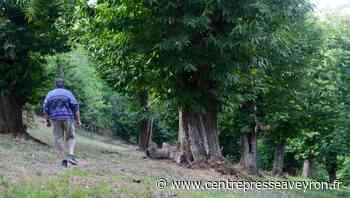 Sur le chemin du châtaignier en Aveyron - Centre Presse Aveyron