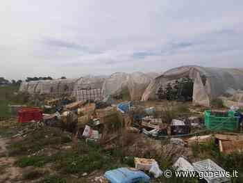 Sequestrate 52 serre abusive vicino l'autostrada a Campi Bisenzio - gonews